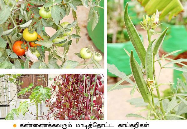 வீட்டுக்குள் விவசாயம் - 11