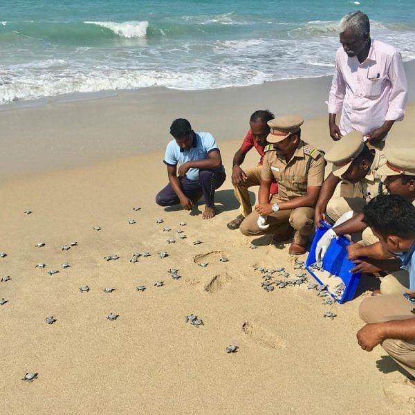 தனுஷ்கோடி கடலில் விடப்பட்ட 96 ஆமைக் குஞ்சுகள்!