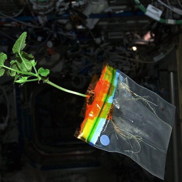 2021-ம் ஆண்டில் விண்வெளியில் பீன்ஸ் விளையலாம் - ஆய்வில் தகவல்