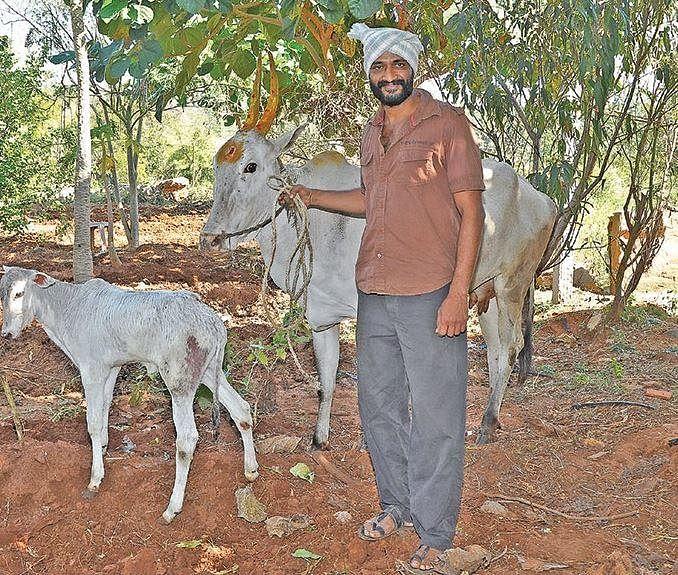 மாடு வளர்க்கும் நடிகர் கிஷோர்