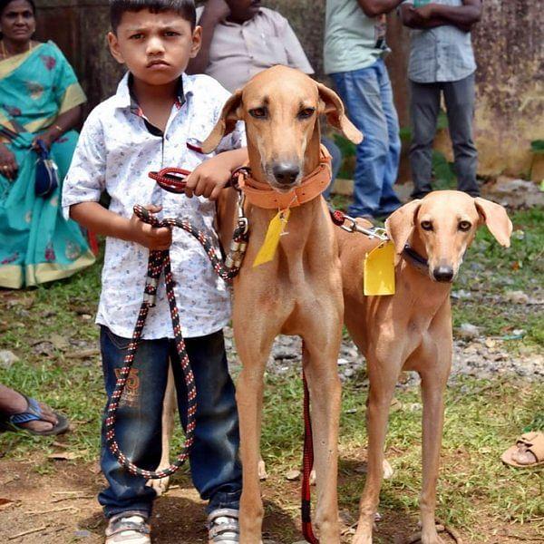 ஏற்காடு கோடைவிழாவில், சுற்றுலா பயணிகளை வெகுவாக கவர்ந்த  நாய் கண்காட்சி!
