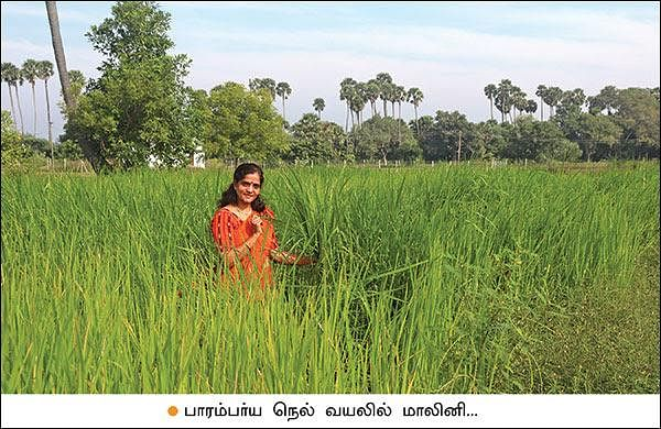 Low expenditure, fulfilled profit... Farm flourishing based on the principles of Nammalvar!