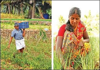 Tomato, brinjal, chili, radish, in 3 acres... Daily income of ₹ 3000!