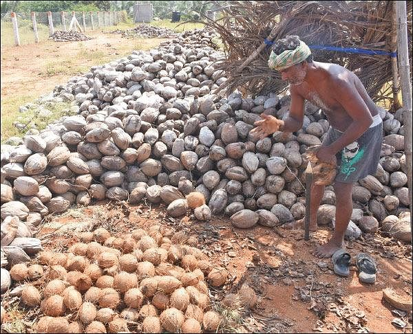 Agri Export for abundant income... Successful strategies! Part 11