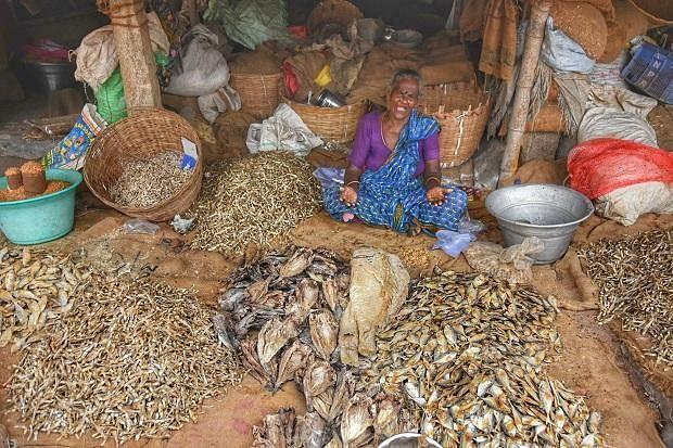 தமிழகம் கண்ட முதல் பிரமாண்ட கருவாட்டுச் சந்தை  - இது மயிலாடுதுறை மண்ணின் அடையாளம்! #MyVikatan