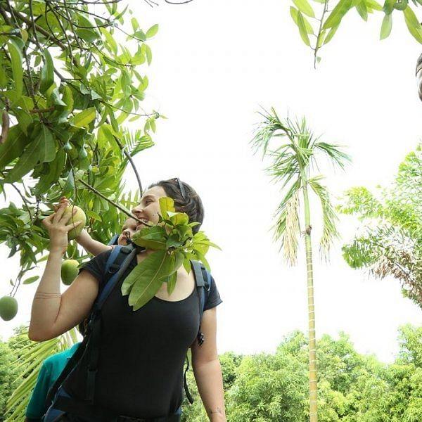 மாம்பழ இட்லி, Mango walk... சென்னைக்கு அருகில் `மாம்பழங்கள் சூழ் உலகம்'!