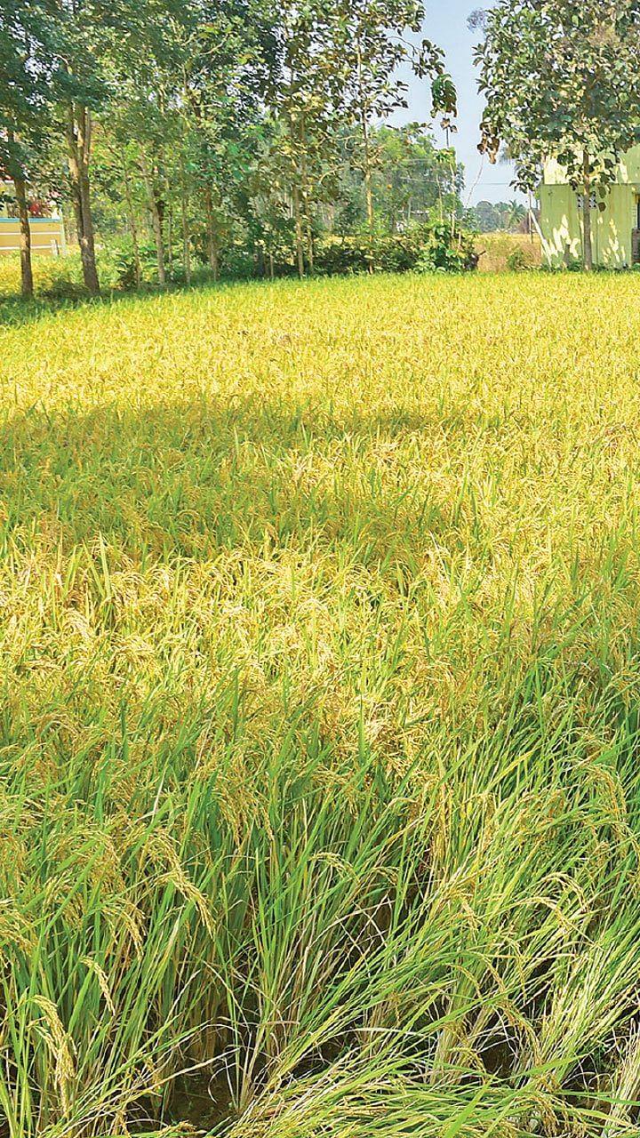 நீங்கள் கேட்டவை: வறட்சியிலும் கைக்கொடுக்கும் பஞ்சகவ்யா!