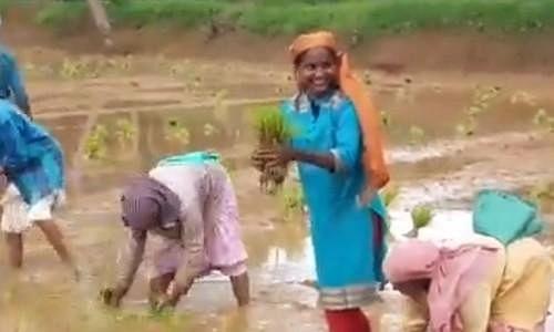 `நானும் ஒரு விவசாயி!'- நடவுப் பணியைத் தொடங்கினார் உங்கள் எம்.பி