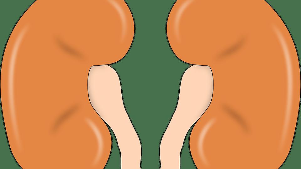 சிறுநீரகம்