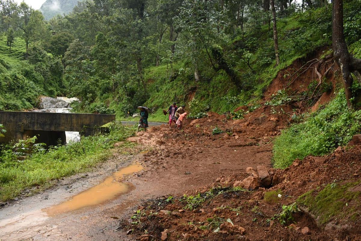 Nilgiri Rain