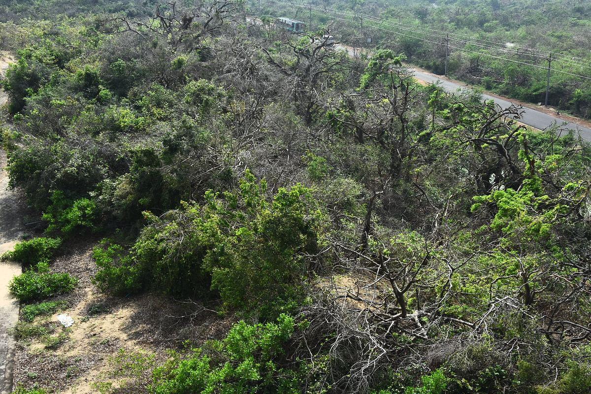 kodiyakarai forest