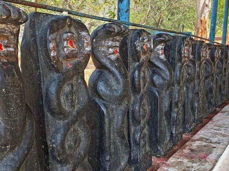 ராகு - கேது தோஷங்கள் தீர்க்கும் 'நாகசதுர்த்தி-கருடபஞ்சமி' விரதங்கள்!- வழிபடுவது எப்படி?