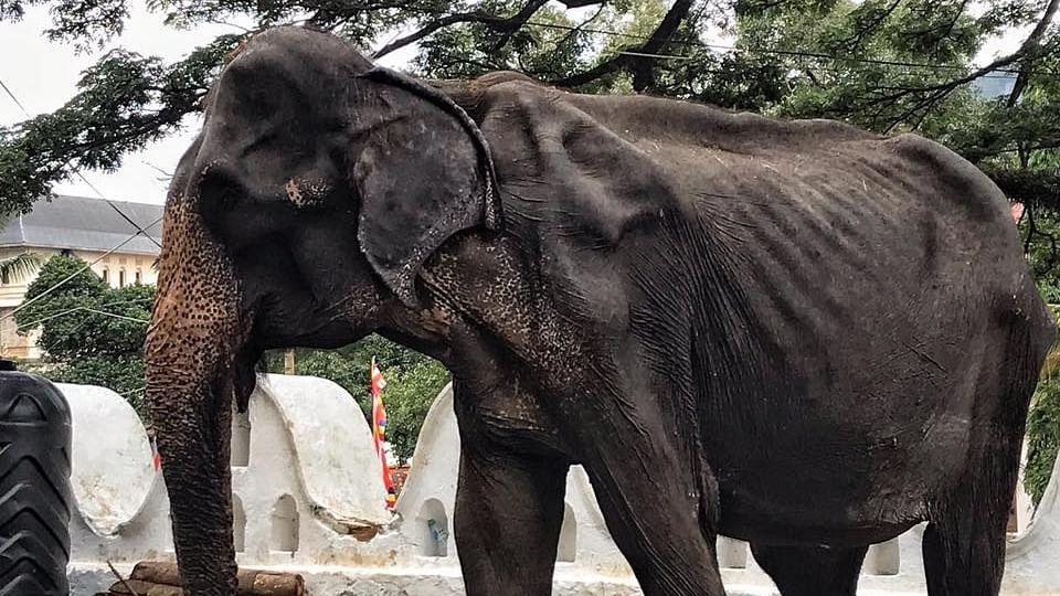 Elephant Tikiiri