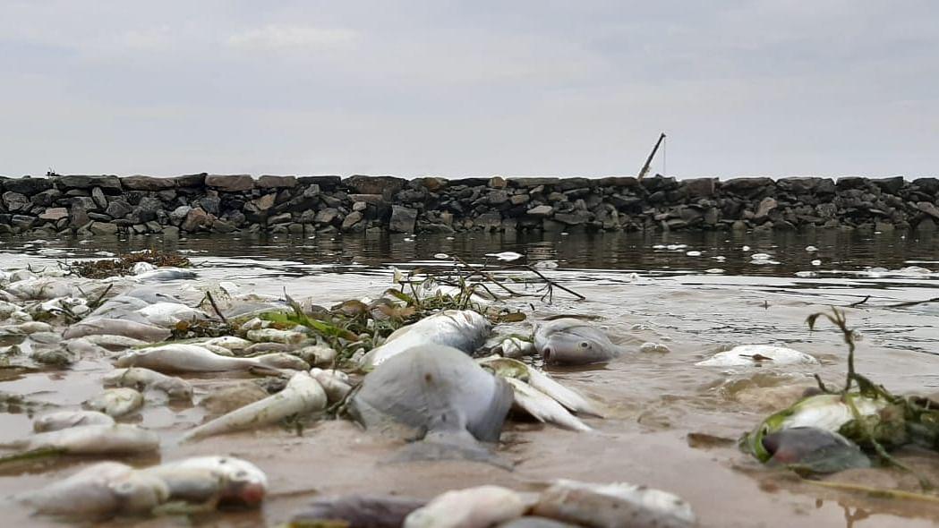 குந்துகால் பகுதியில் கரை ஒதுங்கிய மீன்கள்