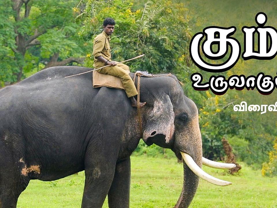 Kumki Elephant Documentary!