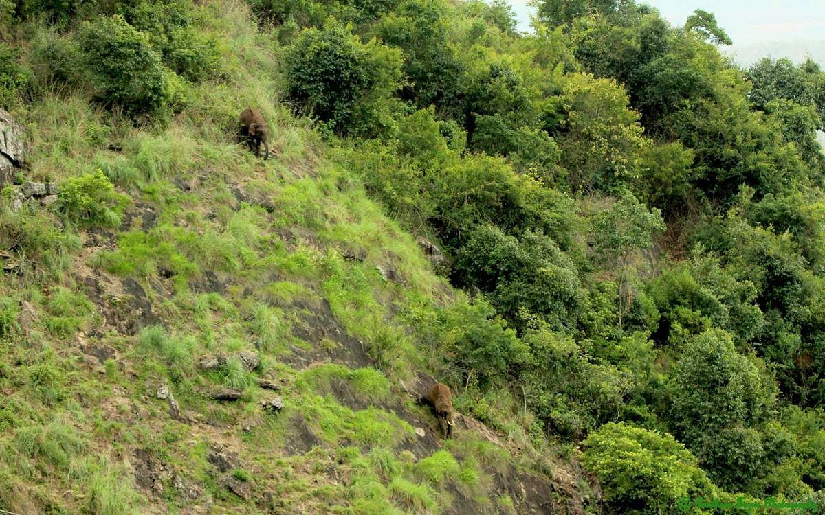 நீலகிரி மலை சரிவில் யானைகள்