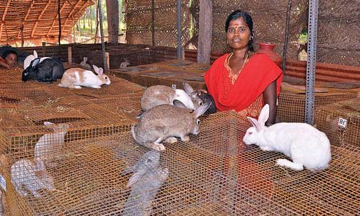 கூரைக் கொட்டகைக்குள் கூண்டுகளில் வளரும் முயல்களுடன் சத்யா