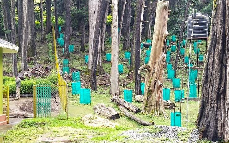 2000 மீட்டர் உயரத்தில் வளரும்; நடப்படும் 5,000 சோலை மரக்கன்றுகள்; மீட்டெடுக்கும் நீலகிரி வனத்துறை