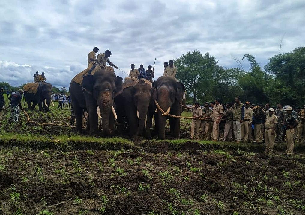 crowbar elephant