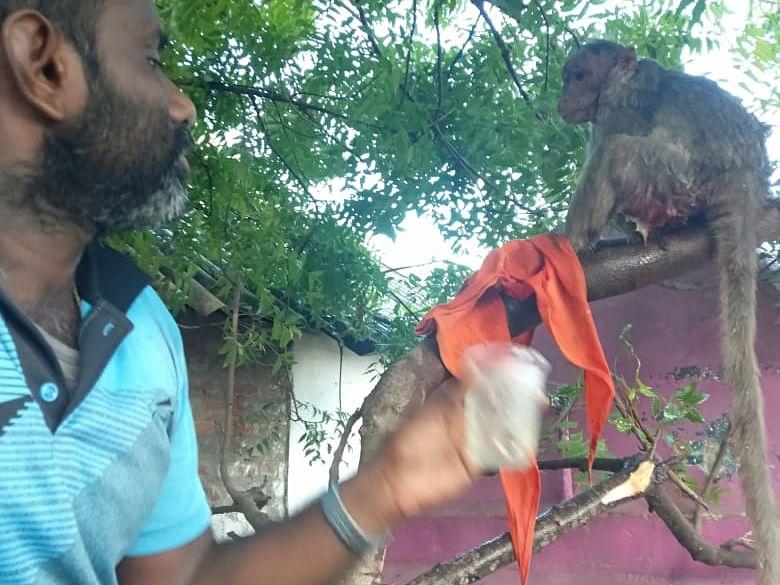 சூழ்ந்துகொண்டு குதறிய நாய்கள்... கதறிய கர்ப்பிணி குரங்கு... ஆசிரியரின் 4 மணி நேர போராட்டம்#MyVikatan