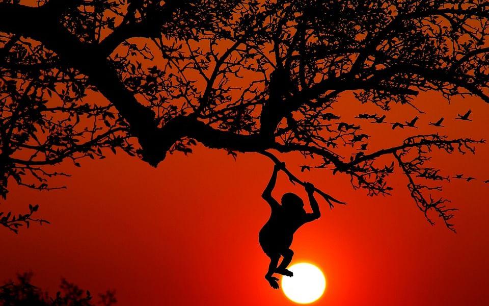 மிட்டாய்ப் பெட்டி - உங்கள் சுட்டிகளுக்கு சொல்ல ஒரு குட்டிக்கதை #DailyBedTimeStories #VikatanPodcast