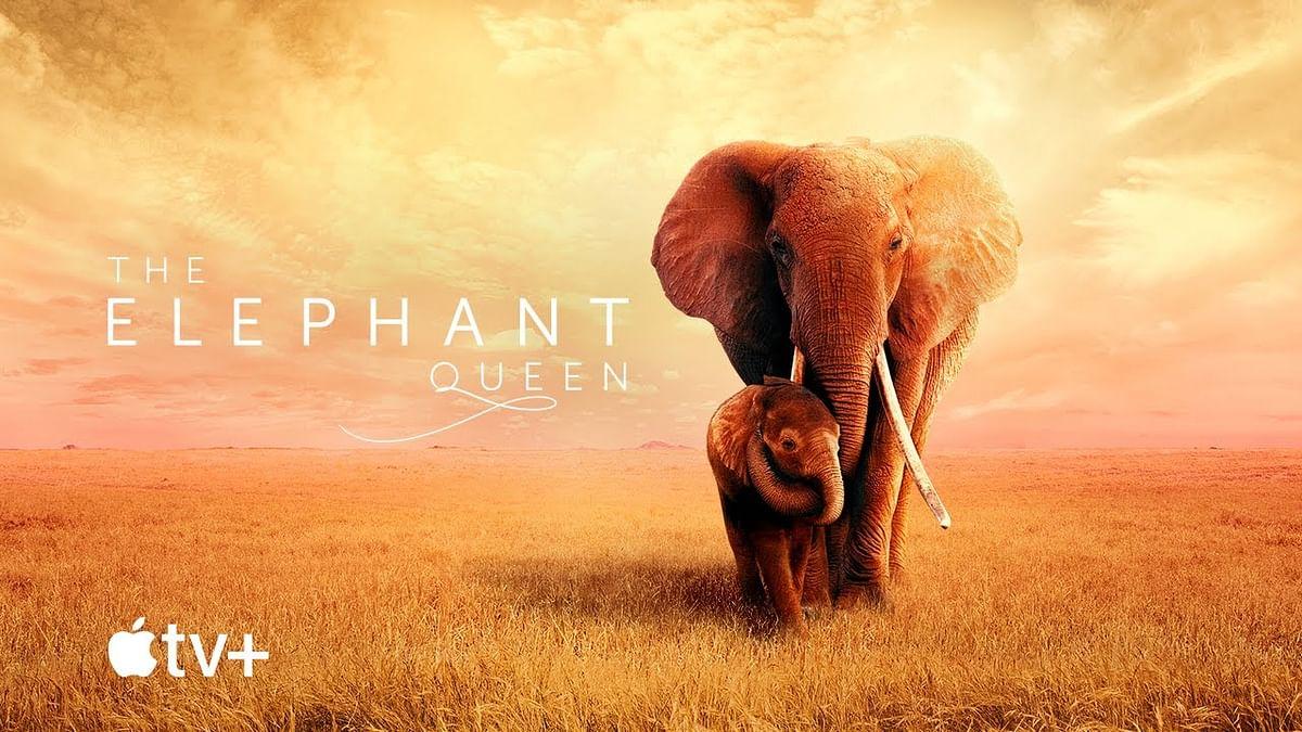 The Elephant Queen | தி எலிபன்ட் குயின்