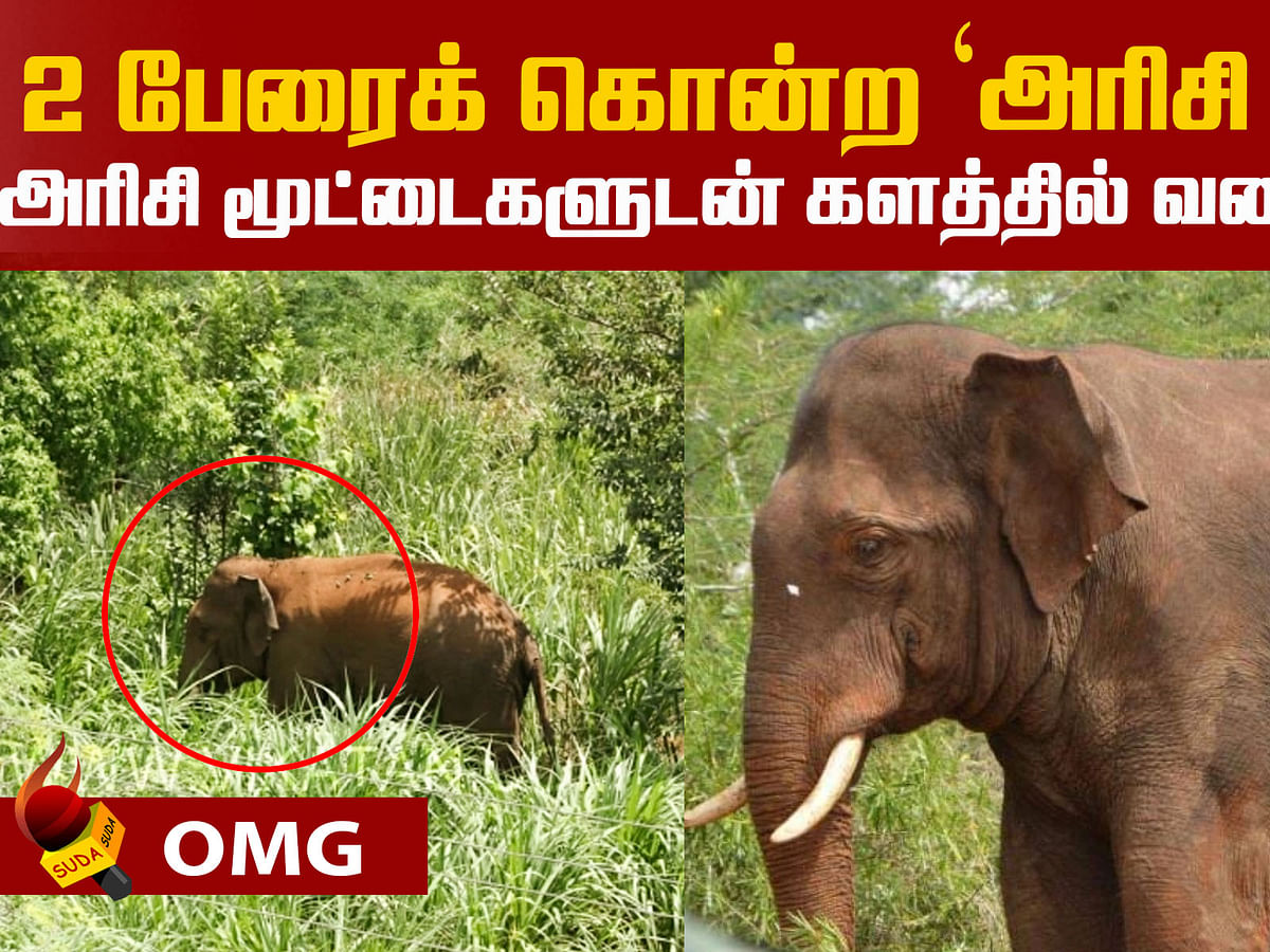 Elephant 'Arisi Raja' - Forest Department's next move?
