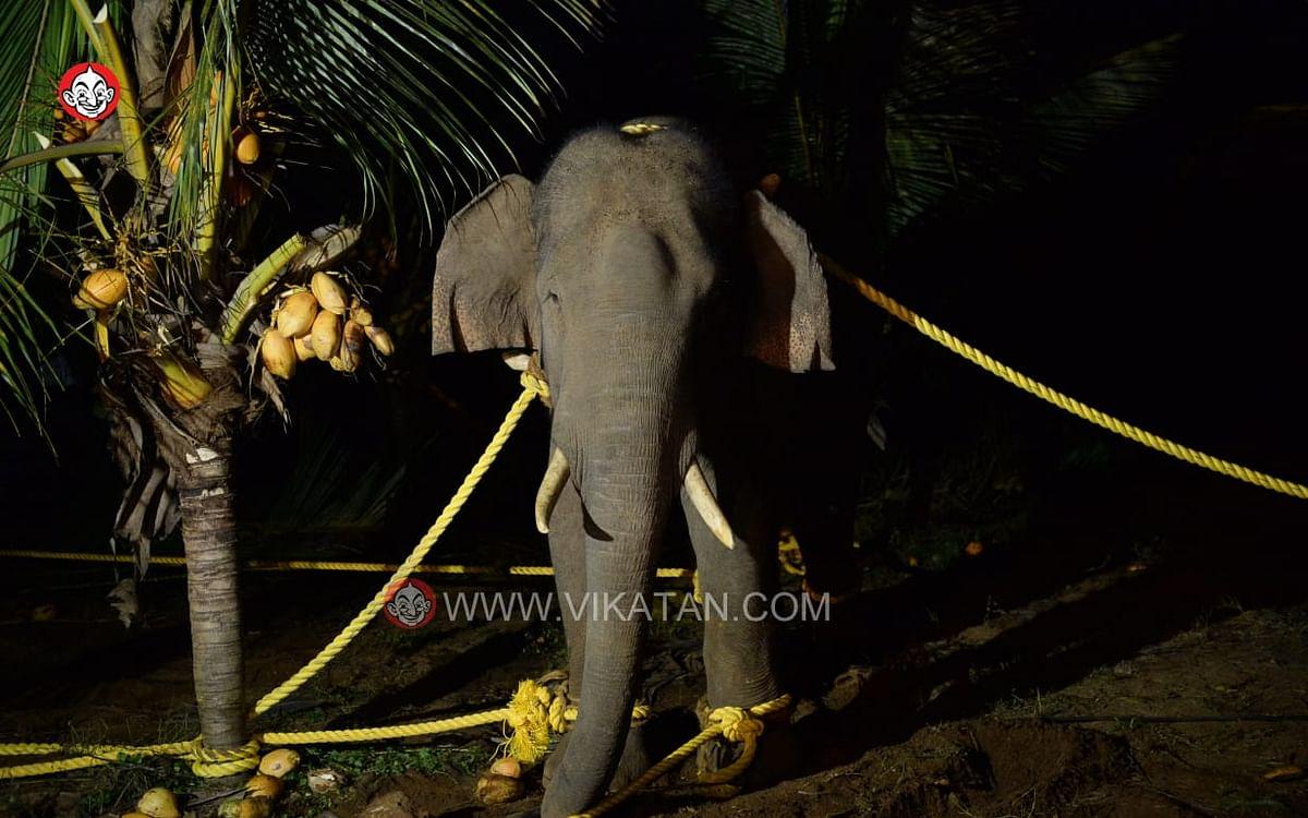 காட்டு ராஜா டு அரிசி ராஜா... நடந்தது என்ன..?  ஒரு டீடெயில் டைம்லைன்!