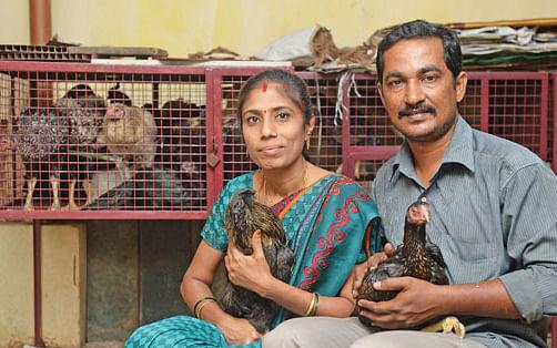 மாதம் 28,000 ரூபாய்... மொட்டை மாடியில் கோழி வளர்ப்பு!