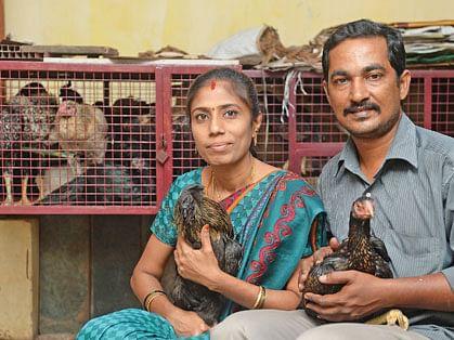 கோழிகளுடன் நித்தியானந்தம்-விஜயபிரியா