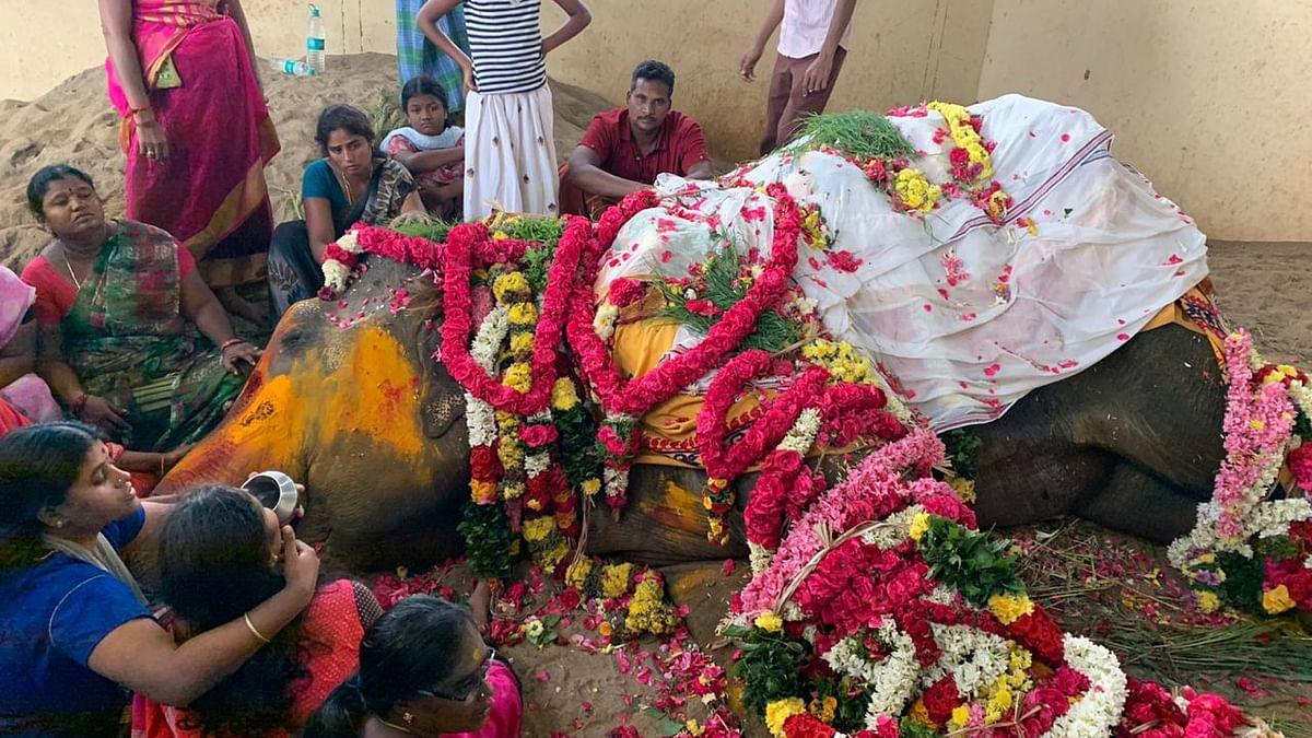 உயிரிழந்த வேதநாயகி யானை