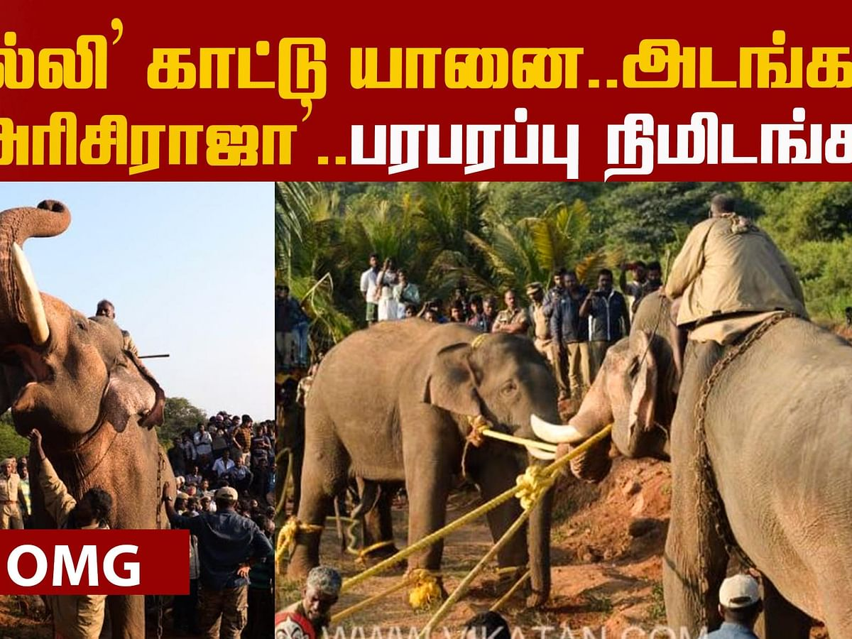 Operation `Arisi Raja' - What happened at the Coimbatore forest? | Elephant