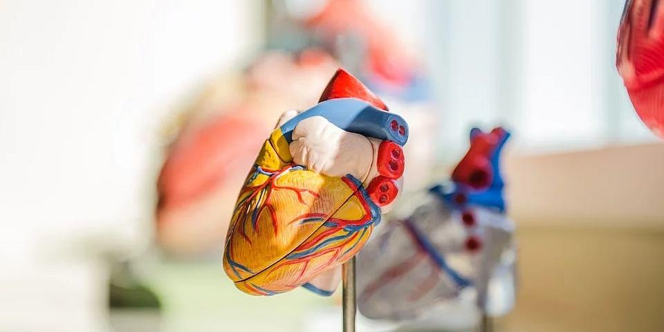Heart  / Representational Image