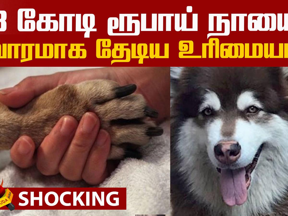 Bengaluru dog worth 8 crores had gone missing!