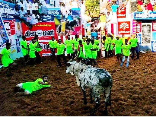 `யாராலும் தொடக்கூட முடியல..!'- அலங்காநல்லூரிலும் அதிர வைத்த இன்ஸ்பெக்டர் அனுராதாவின் காளை