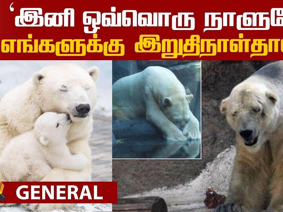 The survival story of Polar Bears!