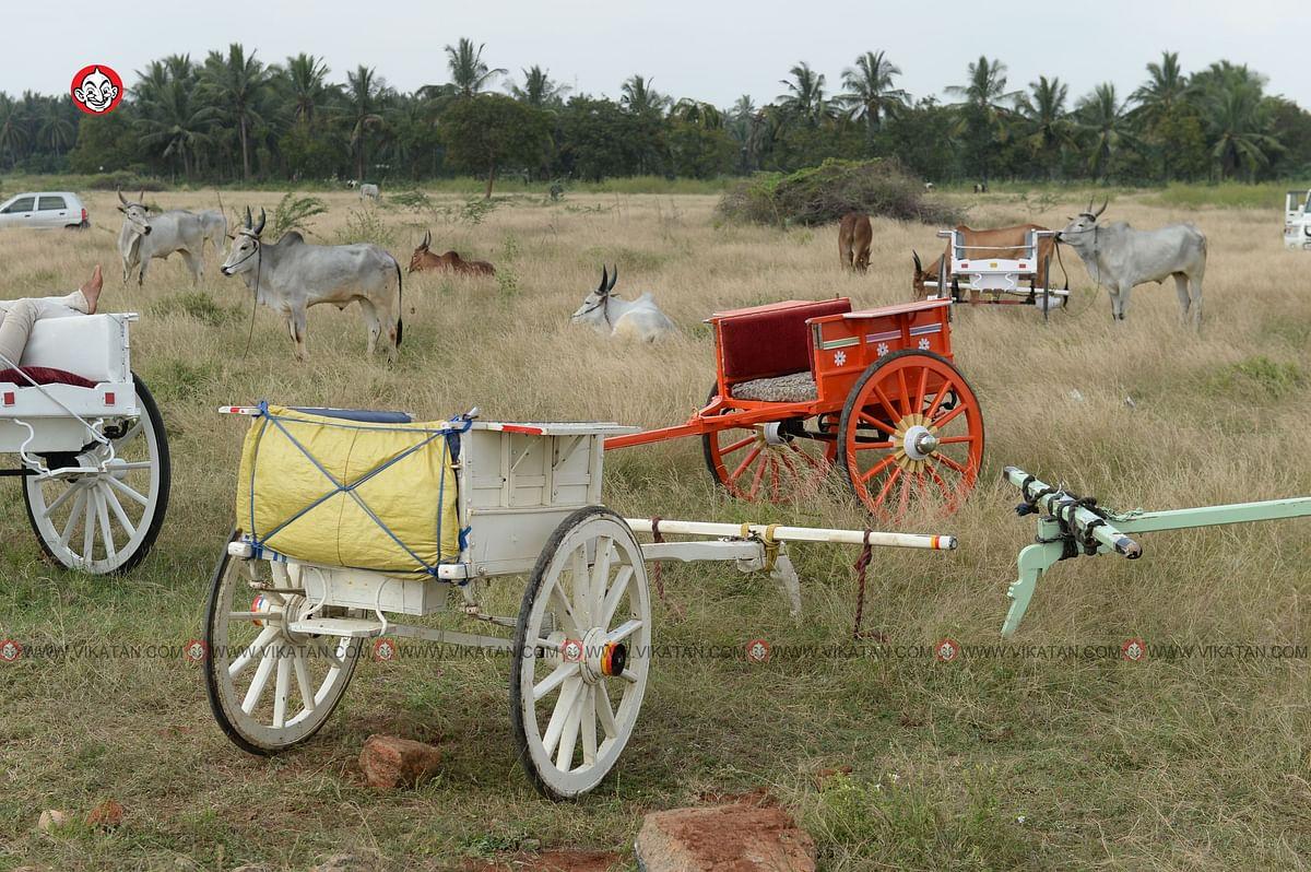 ரேக்ளா பந்தயம்