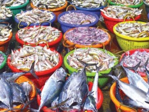 `நம்பி வரும் மக்களை ஏமாற்றாதீர்கள்!' -கரிமேடு சந்தை ரசாயன மீன்களால் கொதித்த அதிகாரிகள்