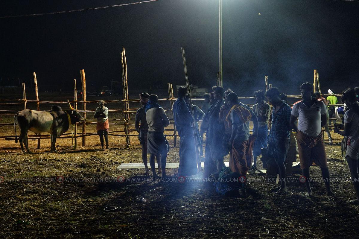 காலை 4:15 மணி   பயண களைப்பில் இருக்கும் காளையை ஓரமாக கட்டியிருக்கின்றனர்.