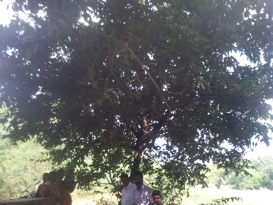 திருவாரூர் அருகே ருத்ராட்ச மரம்... கூட்டம் கூட்டமாக வரும் பக்தர்கள்!