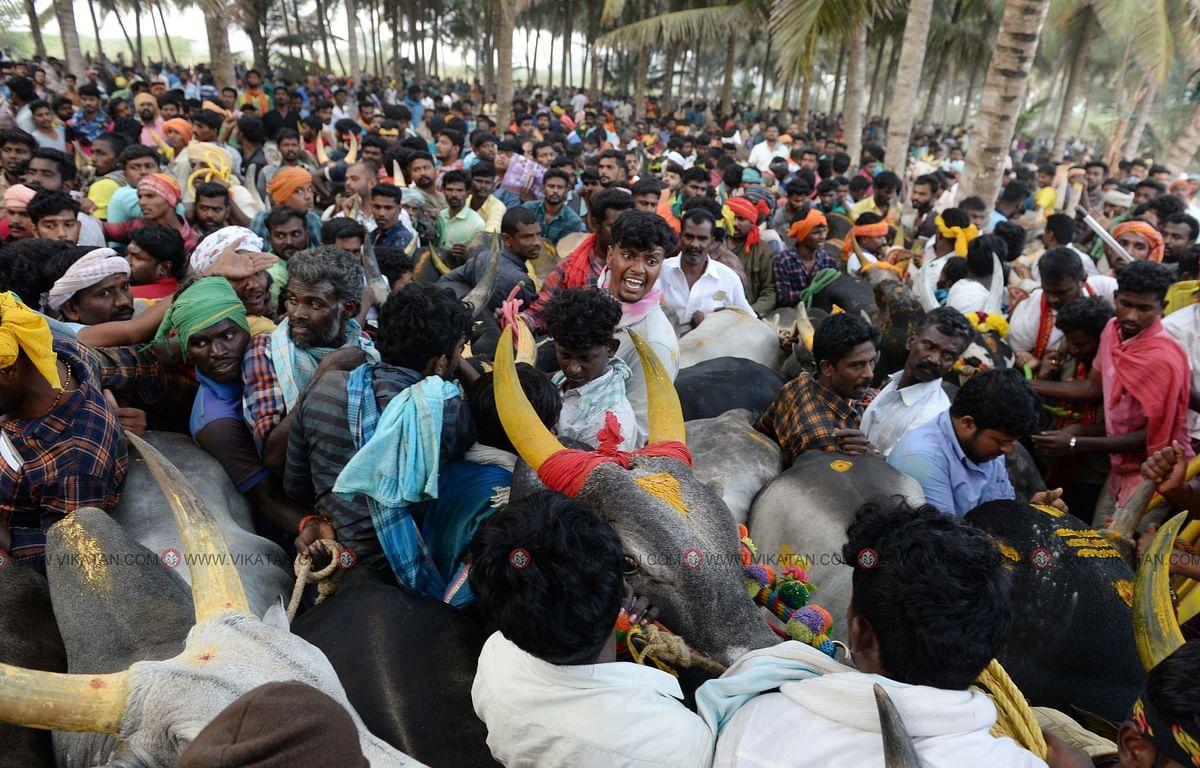 காலை 6:15 மணி   பெரும் திரளாக காளைகளுடன் காத்திருக்கும் மாட்டின் உரிமையாளர்கள்