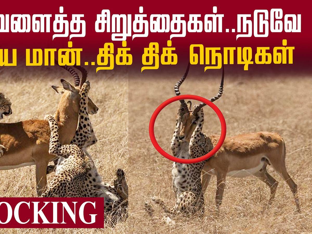 Cheetah Vs Deer - Viral `Survival' Photos!