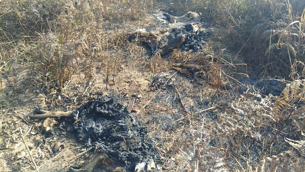 mass wildlife death