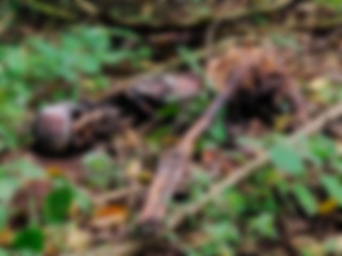 `கொலையா, வனவிலங்கு தாக்குதலா?' - நடுக்காட்டில் கிடந்த சடலத்தால் மிரண்ட நீலகிரி வனத்துறை