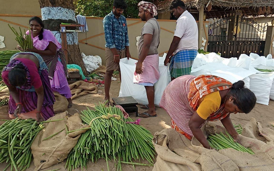 `கிலோ 4 ரூபாய்க்கு வாங்கக்கூட ஆள் இல்லை!' - கொரோனா தாக்கத்தால் கலங்கும் முருங்கை விவசாயிகள்