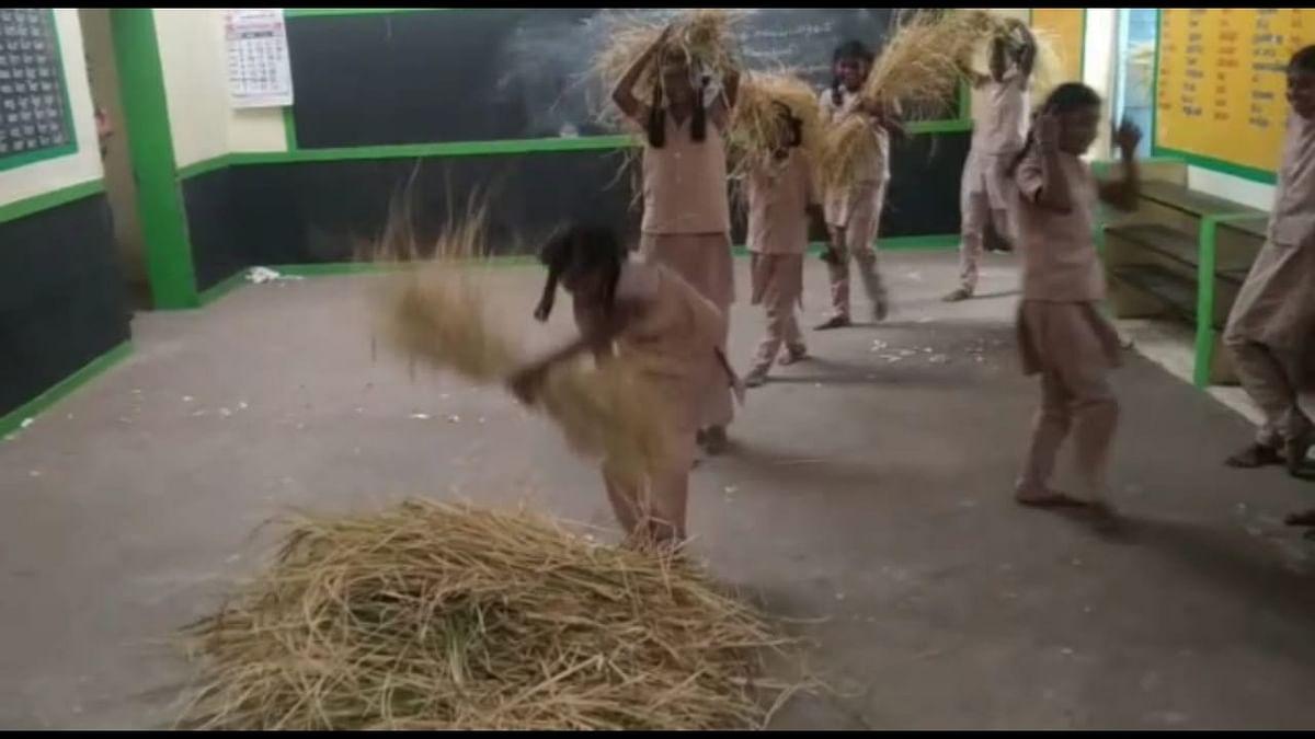 மாணவர்கள் அறுவடை செய்த நெல்