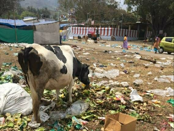 cow with plastic waste