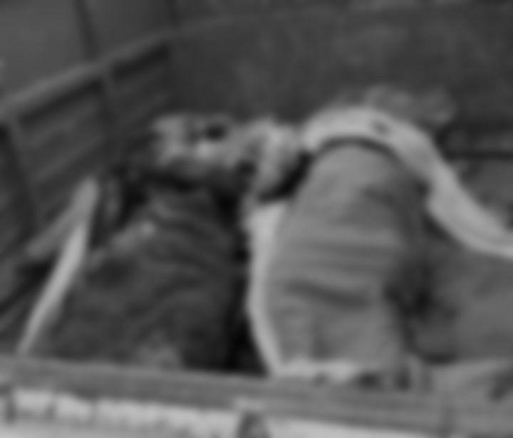 `101 பேரில் ஒருவர்கூட சிறுபான்மையினர் இல்லை!' -பால்கர் சர்ச்சைக்கு முற்றுப்புள்ளி வைத்த தாக்கரே அரசு