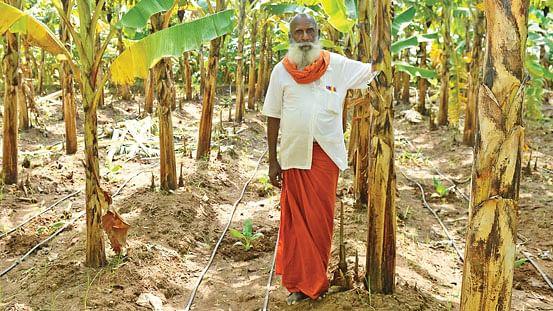ஒய்யாரமாக வளர்ந்து நிற்கும் வாழைமரங்களுடன் ராமசாமி