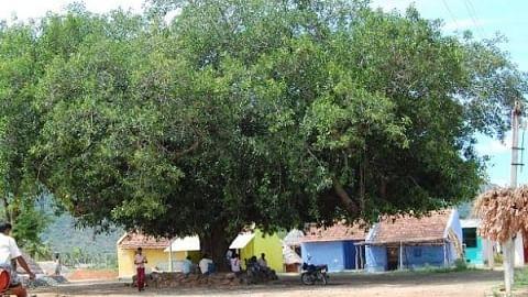 வாச்சாத்தி